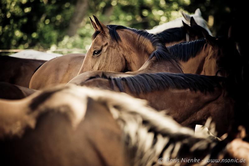 Foto&Pferd Hatten