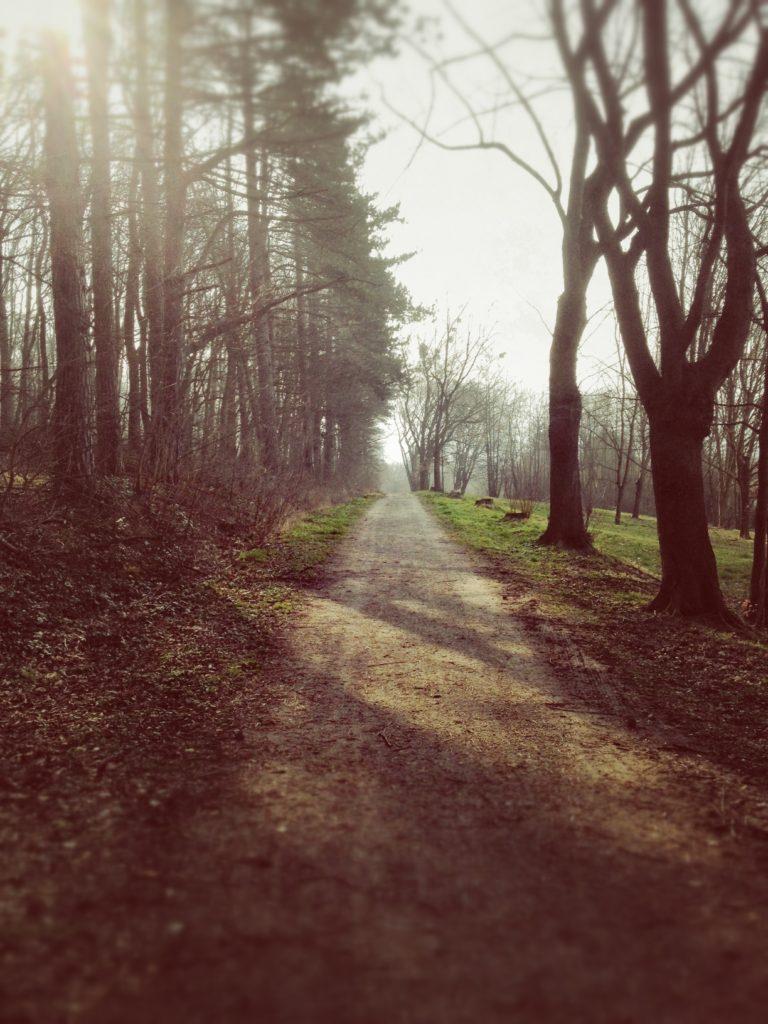 Herausforderung angenommen: Brötchen holen zu Fuß, knappe 9 km